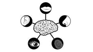 bigthink-sensory