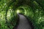smithsonianmag-mw_poison_garden_tunnel.jpg__1072x0_q85_upscale